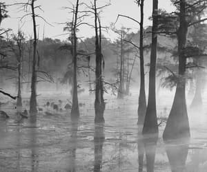 Deep South, forest, and marsh image