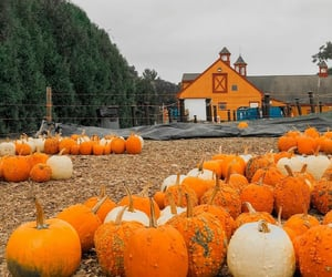 barn, pumpkins, and Halloween image