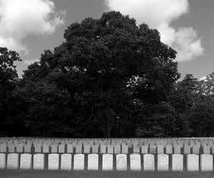 black and white, headstones, and trees image