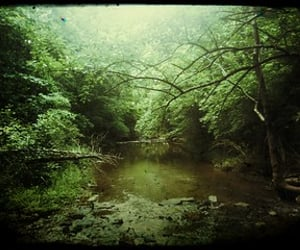 2012, favorite, and forest image