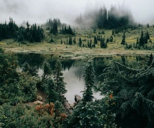 adventure, explore, and forest image