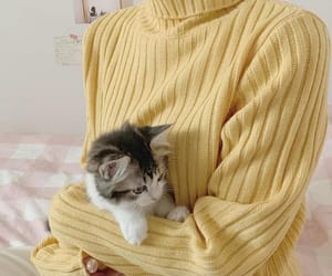 yellow, aesthetic, and cat image