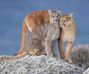 animal, cat, and nature image