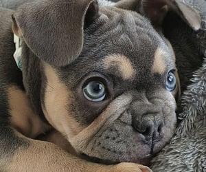 animals, blue eyes, and dog image