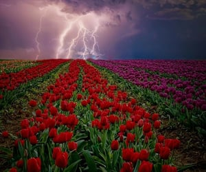 field, flower, and flowers image