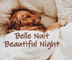 beautiful, golden, and nuit image