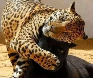 aesthetic, adorable, and leopard image