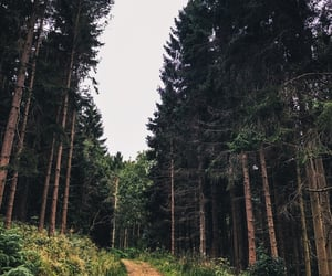 explore, forest, and outside image