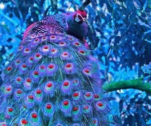 purple, birds, and blue image