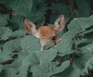 animal, deer, and green image