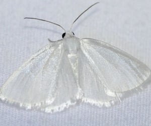 white, aesthetic, and butterfly image