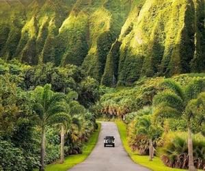 hawaii, green, and travel image