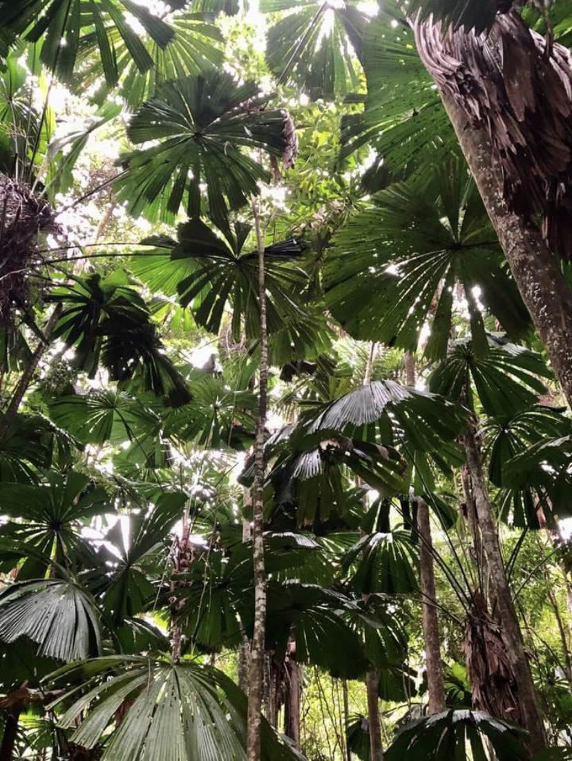 rainforest and nature image