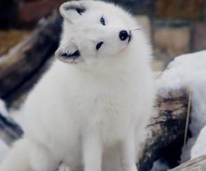 белый, животное, and мило image