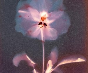 flower, aesthetic, and archive image