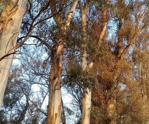 foto, arboles, and naturaleza image