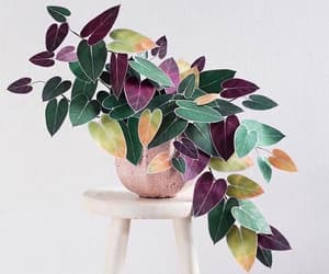 colors, nature, and philodendron image