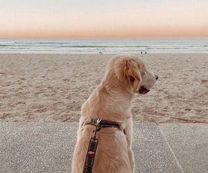 animal, beach, and dog image