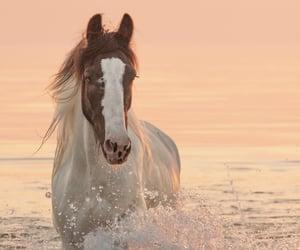 beautiful, horse, and ocean image