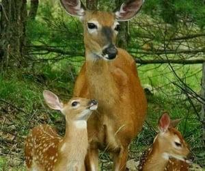 naturaleza, ciervo, and Animales image