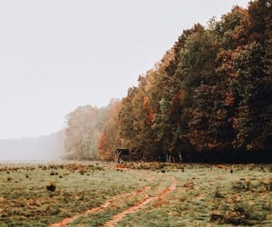 autumn, nature, and seasons image