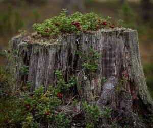трава, лес, and красиво image