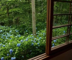 green, nature, and window image