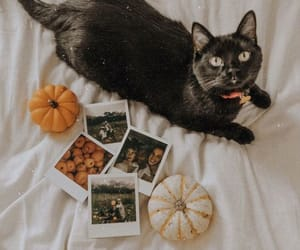autumn, cat, and vintage image