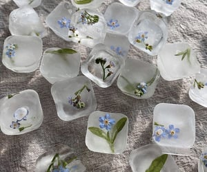 flowers, ice cube, and photography image