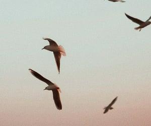 bird, sunset, and beach image