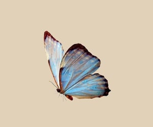 butterfly and wallpaper image