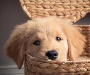 puppy, basket, and dog image