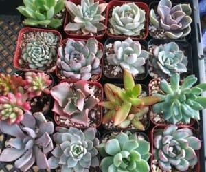 alternative, flower arrangement, and flowers image