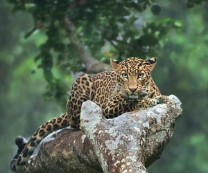 animals, nature, and beauty image