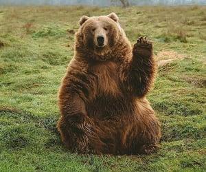 bear and animals image