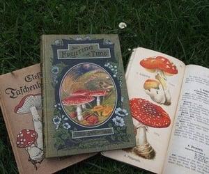 book, mushroom, and cottagecore image