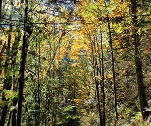 forest, landscapes, and natural image