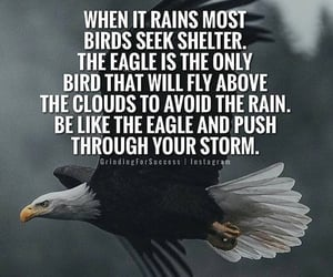 bald eagle, eagles, and quotes image