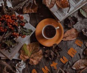 season image