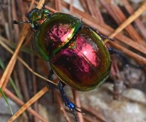 animal crossing, beetle, and bugs image