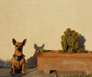 dog, morning, and sunkissed image