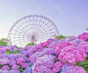 ferris wheel, flowers, and wallpapers image