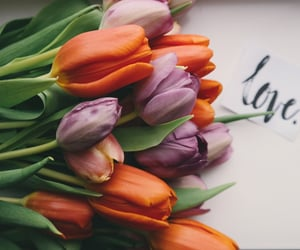 tulips, love, and flowers image