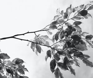 and, black, and leaves image