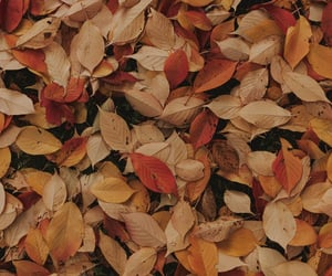 autumn, fallen, and leaves image
