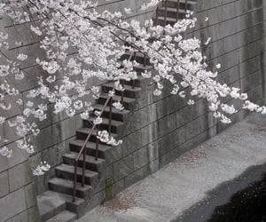 flowers, white, and japan image