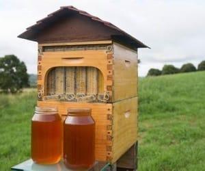 honey, honey bee, and spring image