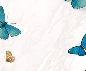 wallpaper and butterfly image