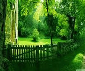 fence and tree image