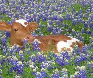 cow, brown, and flowers image
